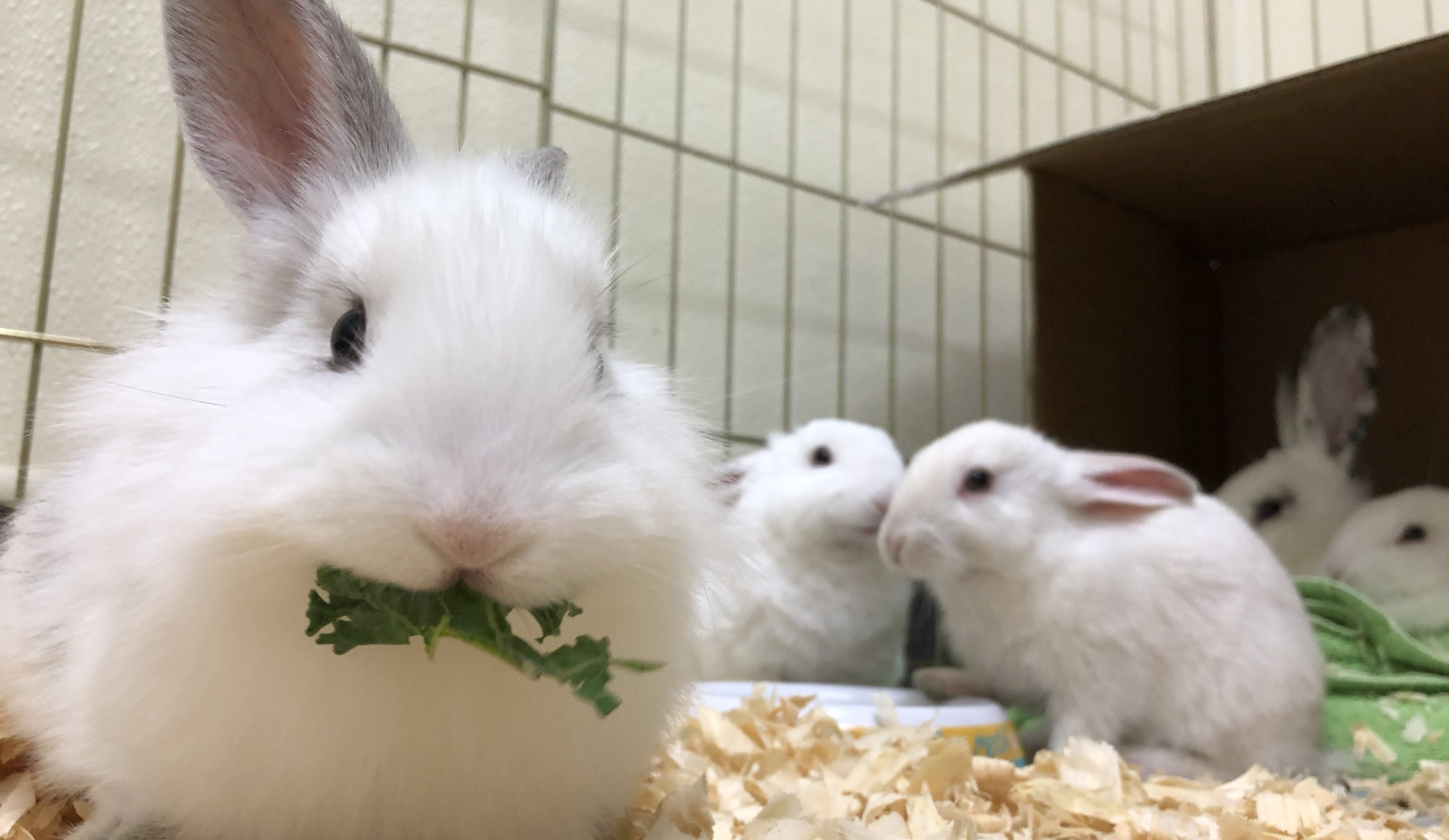 Bunnies For Sale Near Me >> Small Pets Thinking Outside The Box Heritage Humane