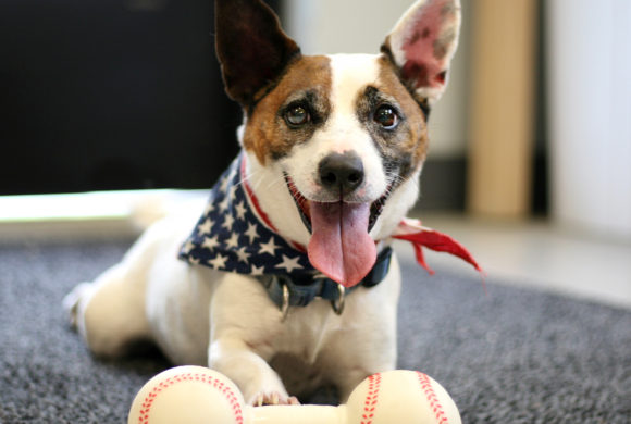 4th of July Fireworks and Pet Safety