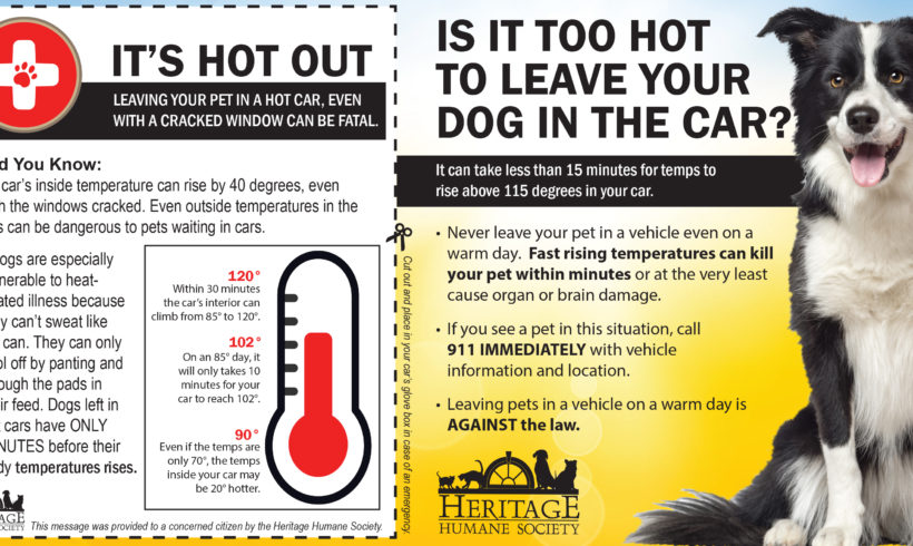 Pets and Hot Cars