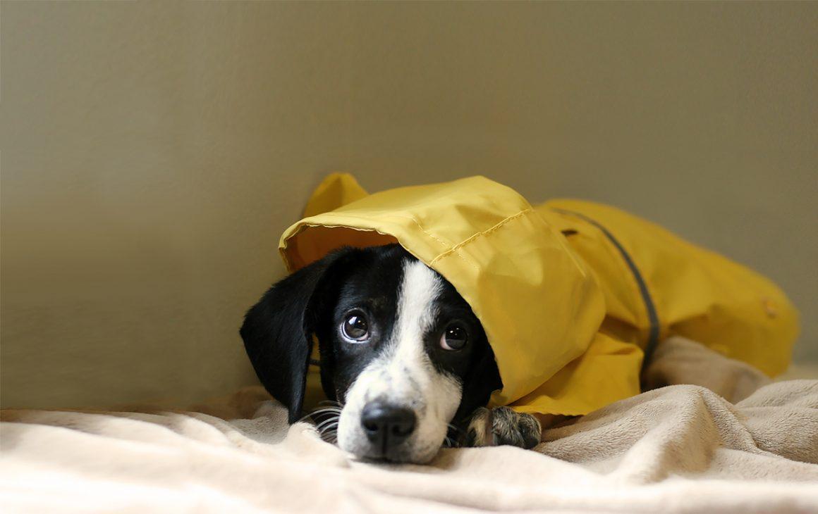 Hurricane Preparedness for Pets