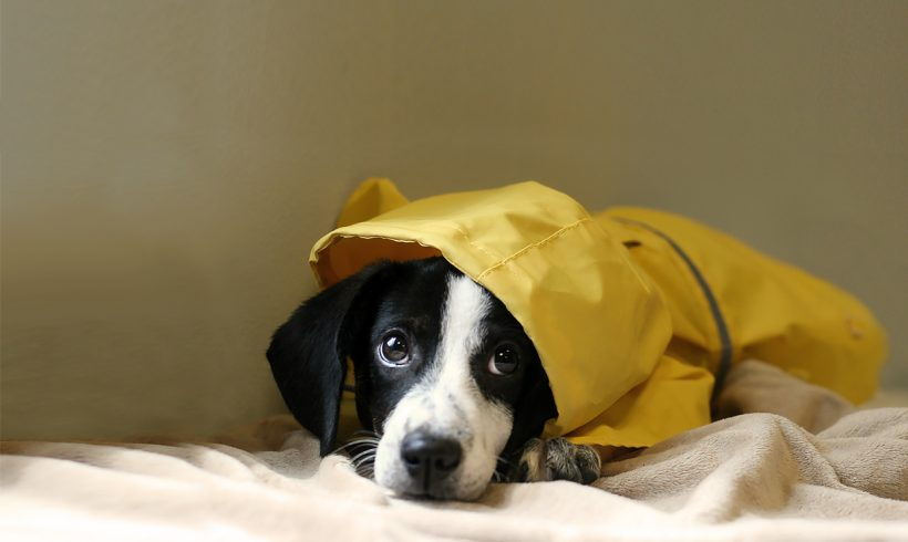 Hurricane Preparedness for Pets