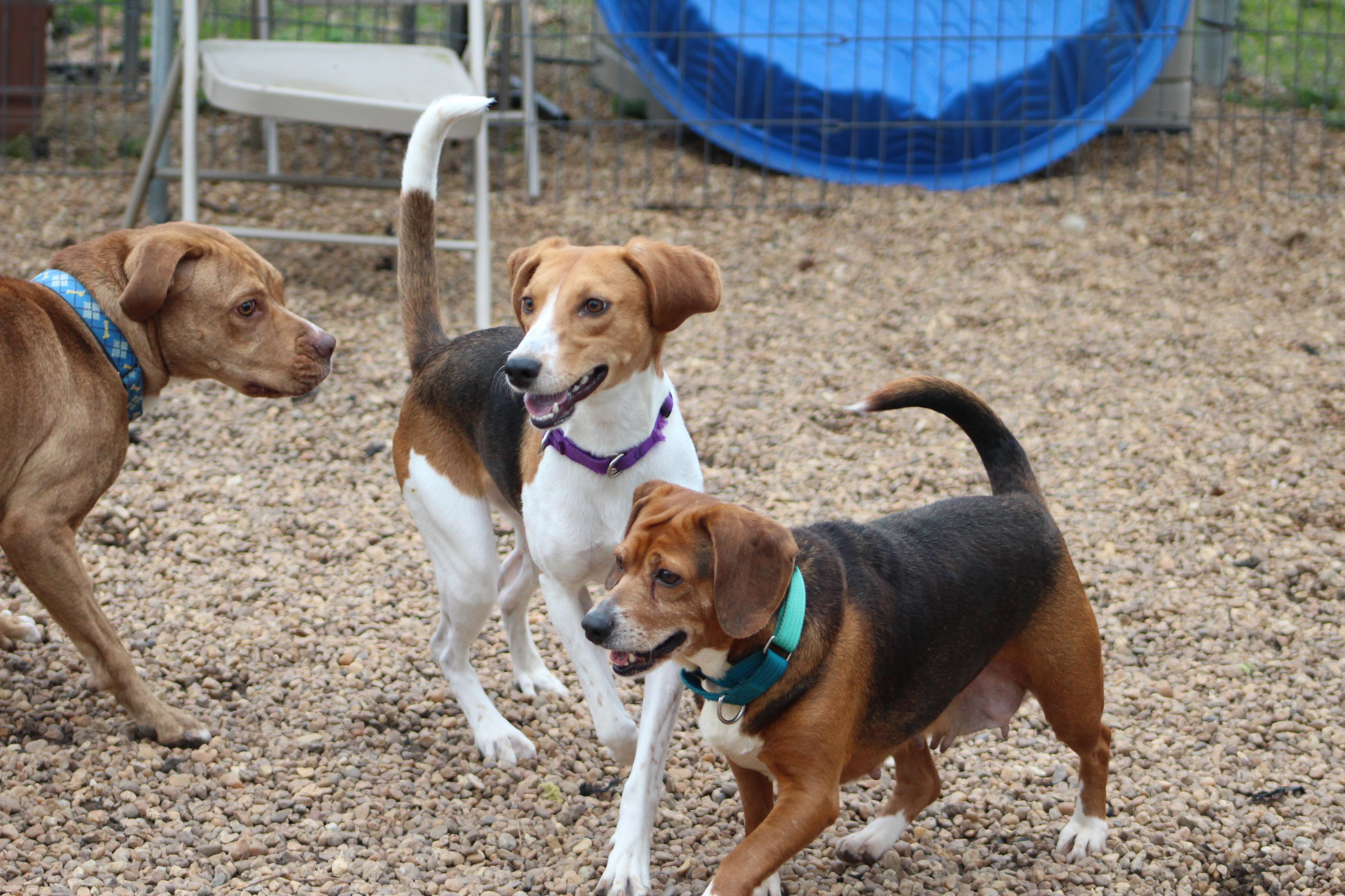 Dog Training Classes - Heritage Humane