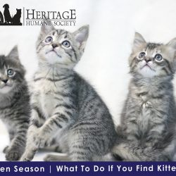 What To Do If You Find Kittens