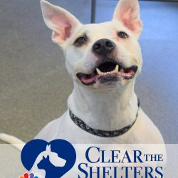 Clear the Shelters Adoption Promotion