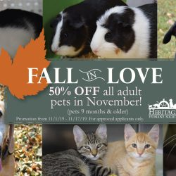 Fall in Love Adoption Coupon