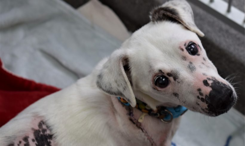 Tater's Story – Your Support at Work!