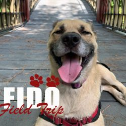 Fido Field Trips
