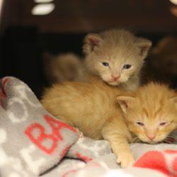 Kitten Wish List