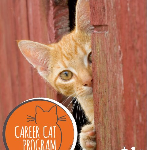 Learn More about our Career Cat Program!