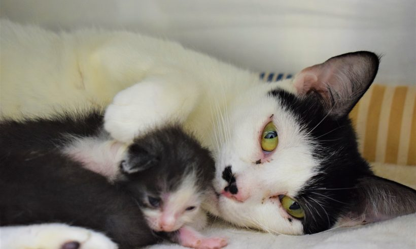 14 Cats Rescued from Hoarding Situation