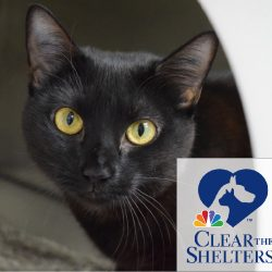 Clear the Shelters Promotion – Extended ONE MORE WEEK!
