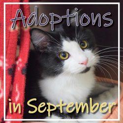 September Adoptions