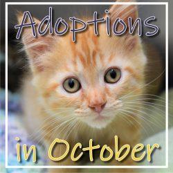 October Adoptions