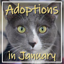January Adoptions