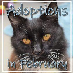 February Adoptions