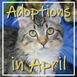 April Adoptions