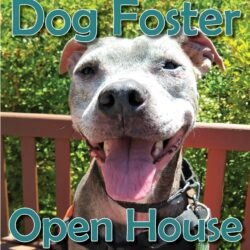 Dog Foster Open House