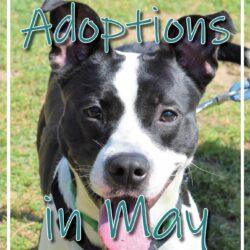 June Adoptions