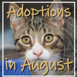 August Adoptions